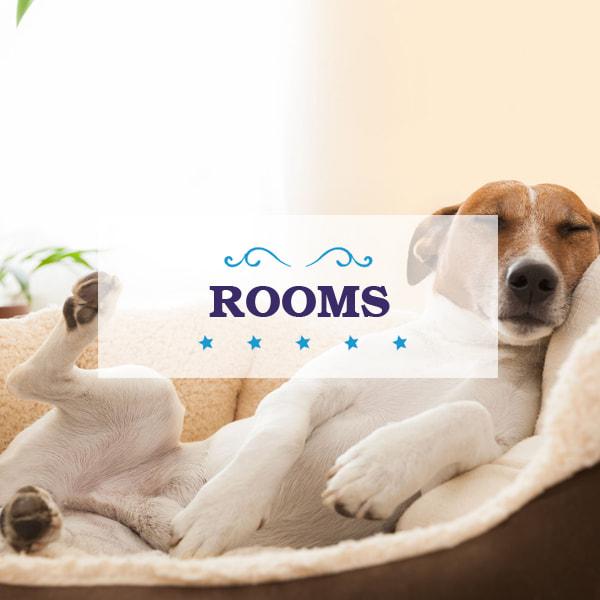 Baxters Dog Hotel Midvaal Gauteng