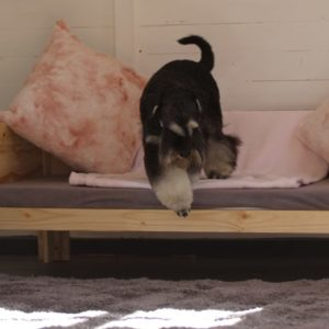 dog hotel rooms